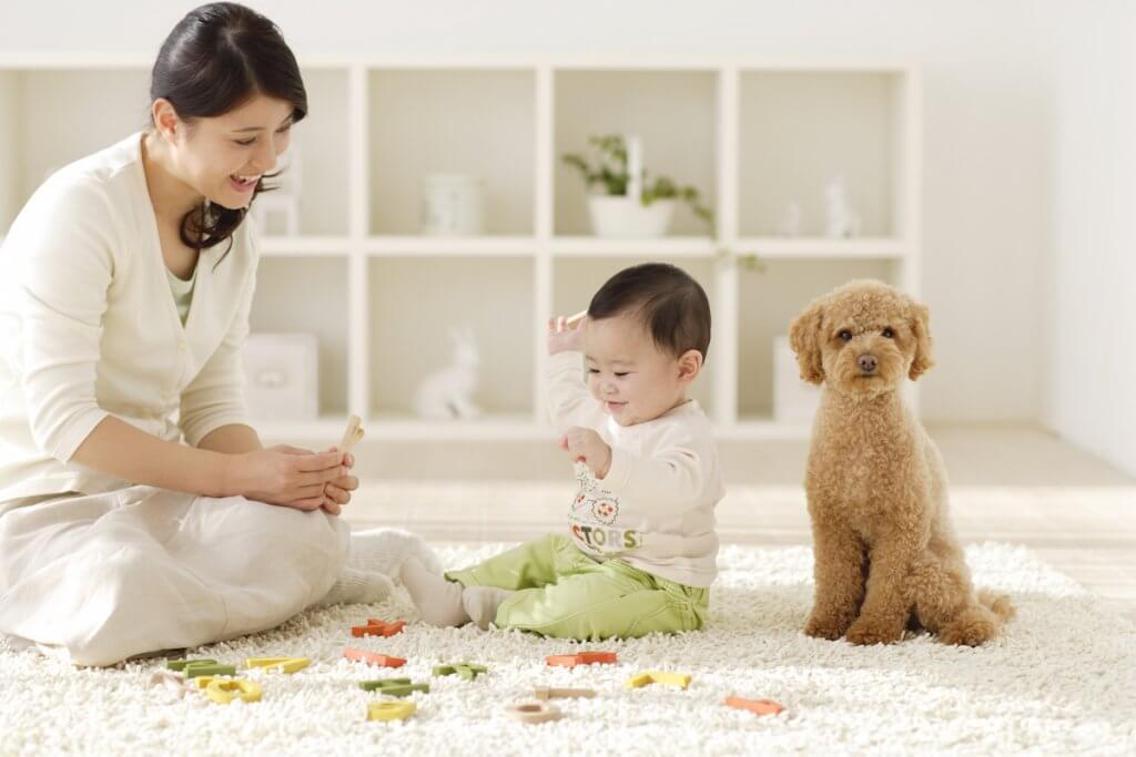 知育玩具で遊ぶ親子と犬